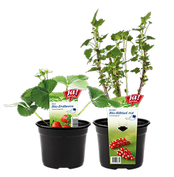 Bio-Jungpflanzen