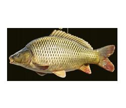 Bio-Fisch