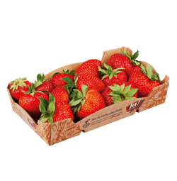 Bio-Erdbeeren