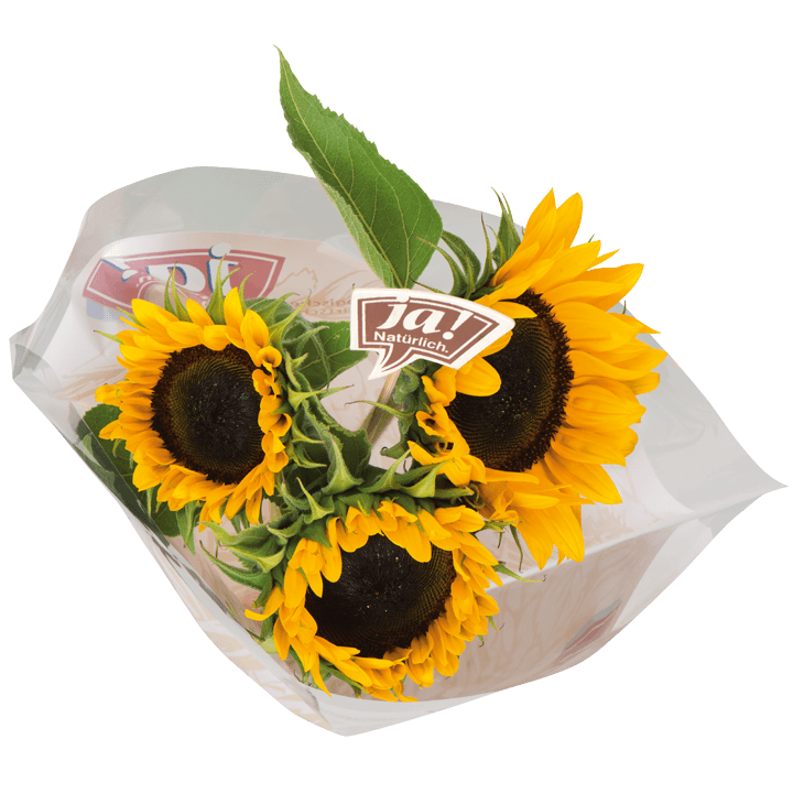 Bio-Sonnenblumen