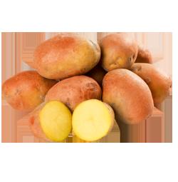 Bio-Erdäpfel-Raritäten Pinki