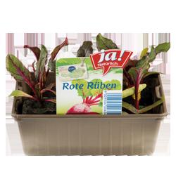Rote Rüben-Jungpflanzen