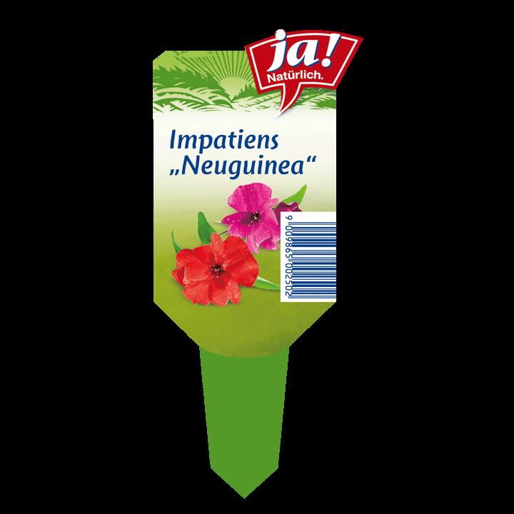 Sommerblume Impatiens