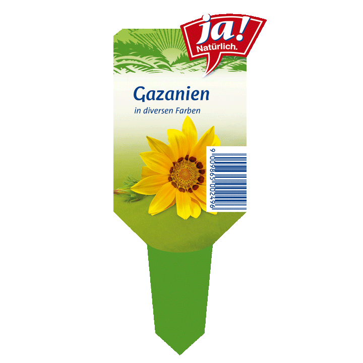 Sommerblume Gazanien