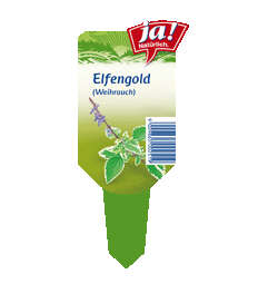 Sommerblume Elfengold